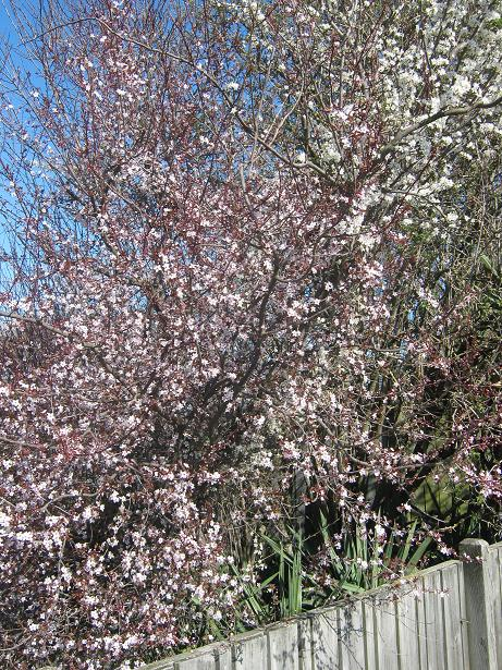 Christchurch Spring 2012 004