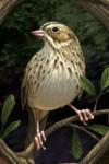 Thornspell_bird