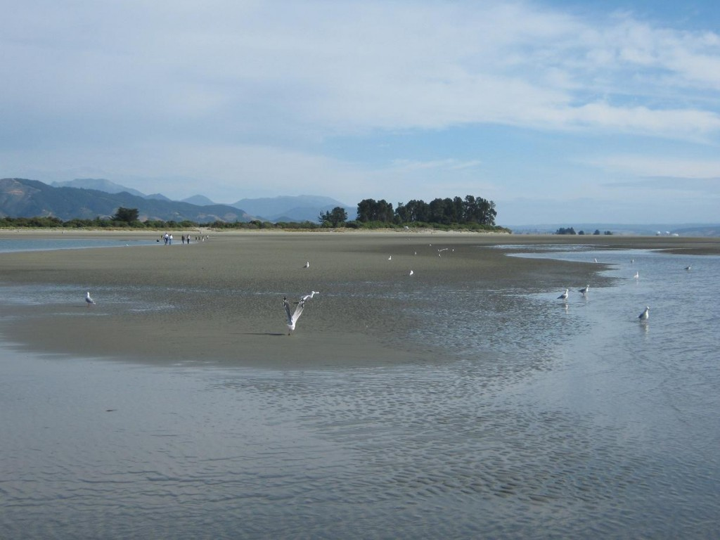Low Tide at Tahunanui
